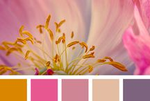 Color Romps / Color Combinations that strike a chord--for decor or craft projects!