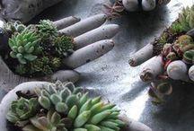 kaktus ve bahce duzenleme