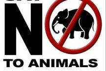 STOP animals in circus