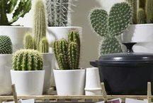 i love cactussen