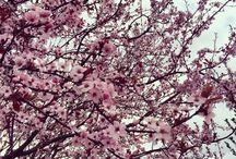 Bahar / #bahargüzelliği