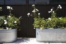 in my garden / my ideal garden ideas
