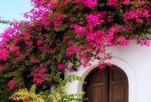 Greece...Rhodes