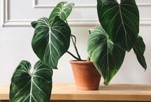 Pretty Plants / Inspire and decorate your space with luscious plants and greenery. These instant mood lifters are the perfect addition to any space!