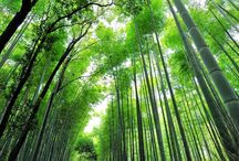 JAPAN / All about Japan: culture, nature, people, food, everything