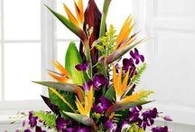 Breathtaking Orchids / http://www.norfolkflorist.com/flowers/orchid-bouquets-virginia-beach-va/