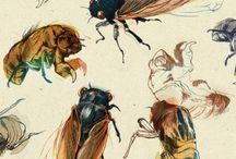 Крылья стрекозы, пчелы, бабочки