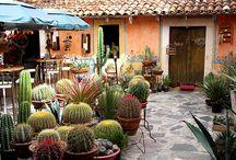 CACTUS / Cactus