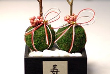 苔玉 bonsai   moss boll