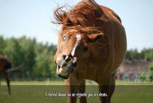 Les citations et les expressions / Les expressions équines viennent d'un temps où le cheval était omniprésent dans la vie de l'homme, certaines d'entres elles colorent aujourd'hui le langage français en lui donnant une touche de nostalgie.