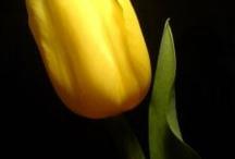 Amarillo =)