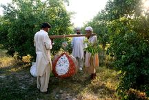 YPARD Pakistan