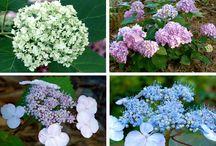 Plants, Gardening, and Outdoor DIY