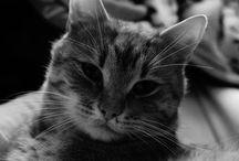 caten