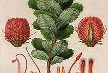 Illustratori botanici