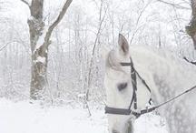 All About Winter / Winter Wonderlands / by Elizabeth Dahdah