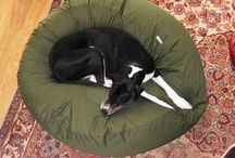 Giant dogs on Giant dog beds / Giant dogs on Giant dog beds that fit the dog and match the decor - not that the dogs care!!!