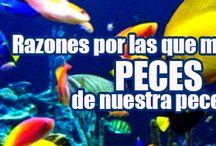 7 CAUSAS DE MUERTE DE LOS PECES DE LAS PECERAS / Parece inexplicable que con todos los cuidados que tenemos con nuestro acuario de casa...inexplicablemente resulten muertos nuestros peces.