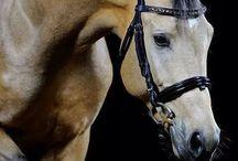 Fotografía de caballos