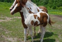 Horses-B.E.A.utiful / by Lynda Hickling
