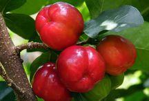 Frutas&frutos