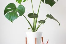 House Plants / House plants, house plant trend, indoor plants.