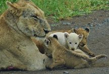 Kruger Park Sightings: Big Five and small five
