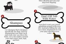 Doggie Stuff and Info