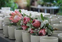 Bouquets Ideas
