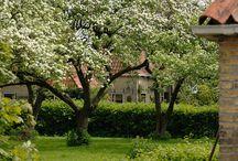 Tuin met sfeer boomgaard