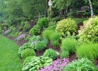 Skråningsplanter