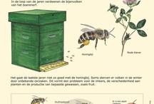Biologie bijen / Biologie bijen