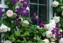 1.5.5.2 flowers