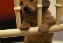Puppies & cute animals