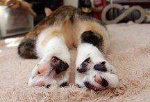 Kocie łapki / Cat paws
