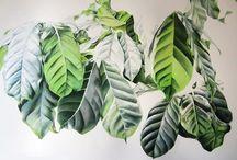 листья в ботанической акварели