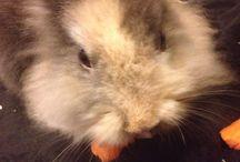 Noce / Rabbit