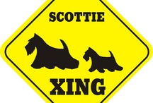 Scottie Collectables