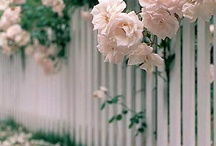 λουλυδια