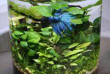 aquaristic