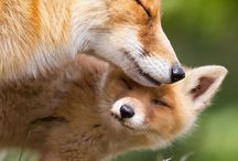Furry and Fuzzy Families / by Critter Control