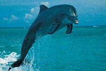 Precioso delfin
