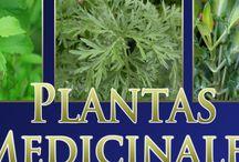 remedios verdes
