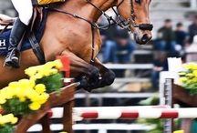 Een heel mooi springen paarden of pony of veulen