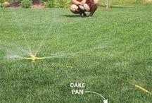 yard assistance please!