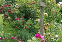 gardeningsadore114