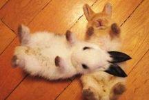 bunnylove♥