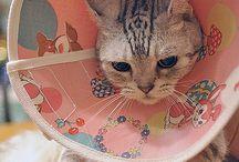 ニャンコフ / かわいい猫。猫グッズ。