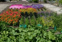 "High Desert Gardening / ""Gardens are not made by singing 'Oh, how beautiful,' and sitting in the shade."" Rudyard Kipling"
