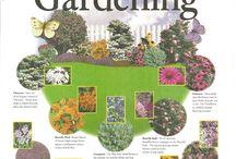 Butterfly/reading garden